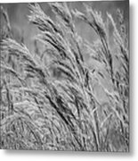 Springtime In The Field - Bw Metal Print