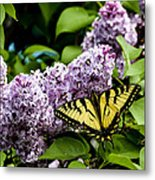 Springtime Lilac And Butterfly Metal Print