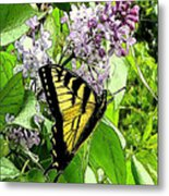 Springtime Moments- The Butterfly And The Lilac  Metal Print
