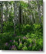 Springtime On The Grand Mesa Metal Print