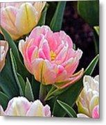 Springtime Sprites -- Parrot Tulips Metal Print