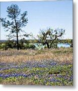 Springtime Texas Bluebonnets Naturalized Metal Print
