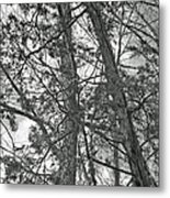 Springtime Woods - New Jesey Pine Barrens - Black And White Metal Print