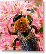 Sprinkled With Pollen Metal Print