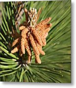 Sprintime Pine Metal Print