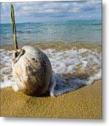 Sprouting Coconut Washed Up On Beach Metal Print by Naki Kouyioumtzis