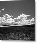 Sprouting Field Of Sunflowers And Field Of Rape At Back. Auvergne. France Metal Print