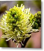 Sprouts On A Bush Metal Print