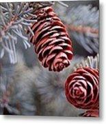 Spruce Cone Closeup II Metal Print