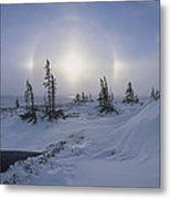 Spruce Forest With Sundogs Hudson Bay Metal Print