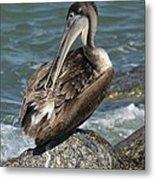 Sprucing Pelican Metal Print