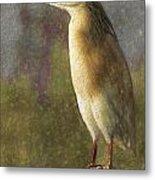 Squacco Heron Ardeola Ralloides Metal Print