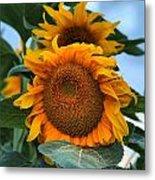 Squamish Sunflower Portrait Metal Print
