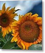Squamish Sunflowers Metal Print