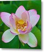 Square Lotus Flower Metal Print