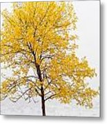 Square Tree Metal Print