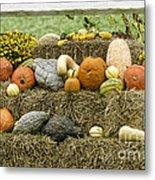 Squash Gourds And Pumpkins Metal Print