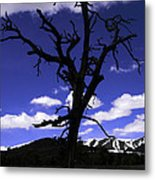 Squigly Tree Metal Print