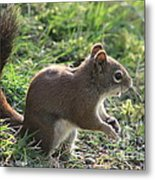 Squirrel And His Sunflower Seed Metal Print