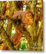 Squirrel Away Acorn Metal Print