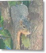 Squirrel Chillin Metal Print