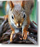Squirrel Close-up Metal Print