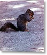 Squirrel Eating A Nut Metal Print