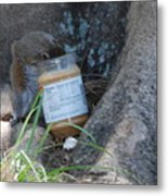 Squirrel Eating Metal Print