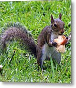 Squirrel Eats Mushroom Metal Print