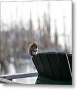 Squirrel Friend Metal Print