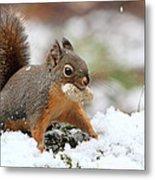 Squirrel In Snow Metal Print