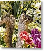 Squirrel In The Botanic Garden-dallas Arboretum V4 Metal Print