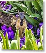 Squirrel In The Botanic Garden Metal Print