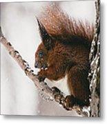 Squirrel In Winter Metal Print