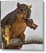 Squirrel Lunch Time Metal Print