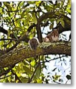 Squirrel On A Branch Metal Print
