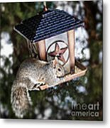 Squirrel On Bird Feeder Metal Print by Elena Elisseeva
