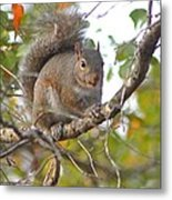 Squirrel On Branch Metal Print