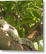 Squirrel On The Tree Metal Print