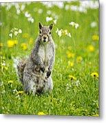 Squirrel Patrol Metal Print