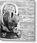 Squirrel Metal Print by Paulina Szajek