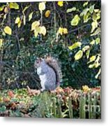 Squirrel Perched Metal Print