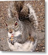 Squirrel Possessed Metal Print