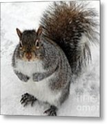 Squirrel Saying Feed Me Please At Niagara Falls Metal Print