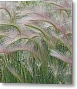 Squirrel Tail Grass In The Wind Metal Print