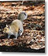 Squirrel Time Metal Print