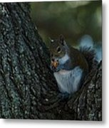 Squirrel With Nut Metal Print