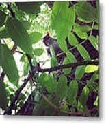 Squirrell Metal Print