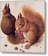 Squirrels Metal Print