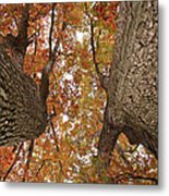 Squirrel's Vision Of A Good Day Metal Print